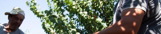 Azienda Agricola - Raccolta della Frutta