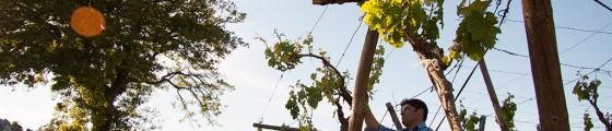 Il vino bianco di locorotondo - Azienda Agricola Catucci